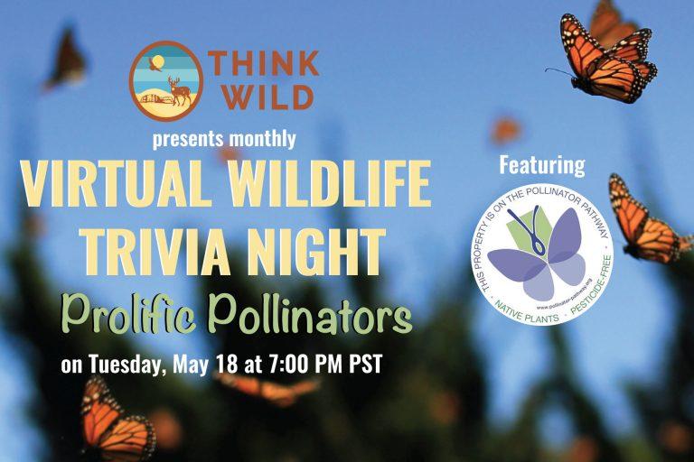 pollinator-trivia